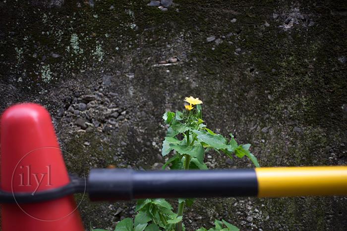 噂通りの名玉 色乗りの良さとシャープな線 Carl Zeiss Jena Flektogon 35mm/F2.8 Zebra M42