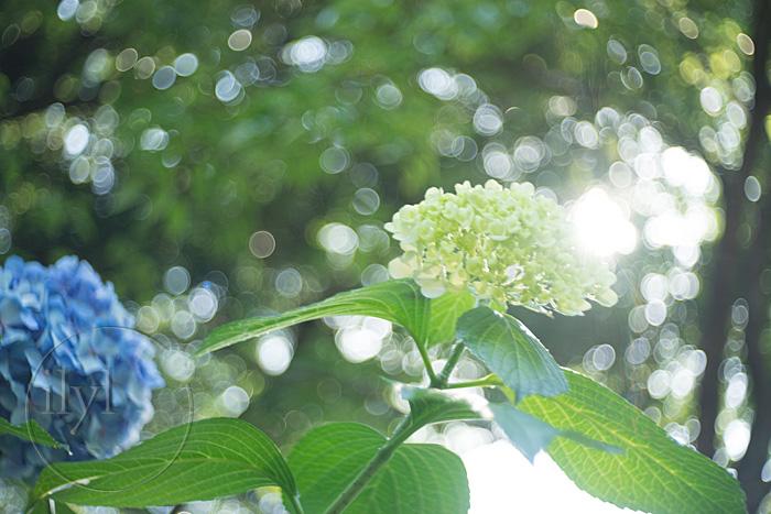 バブルボケを標準画角で手軽に楽しむ!光の違いをワガママに表現するMeyer-Optik Trioplan 50mm F2.9