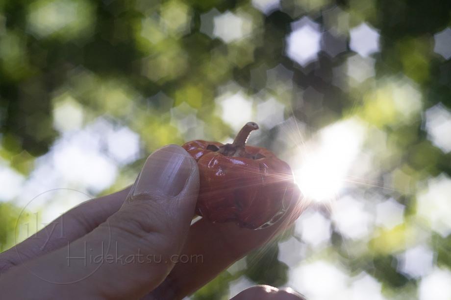 六芒星ボケとシャープな描写のIndustar-61 L/Z 50mm F2.8 のヤフオク出品レンズ写真館