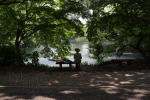 近距離のボケと階調表現が素晴らしい準広角 Flektogon 35mm F2.4 黒鏡筒 in 井の頭公園