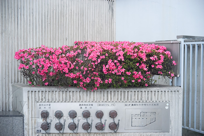 Voigtländer Color-Lanthar 50mm Leica L39