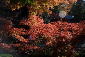 メイヤーの黄金期を垣間見られる準広角のPrimagon F4.5 35mm in 調布 深大寺で紅葉と神代植物公園に