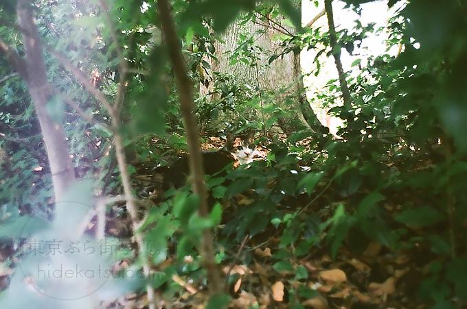 フィルムカメラはやっぱり露出も難しかったFlektogon Zebra