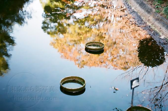 続・Biotar 58mm。やっぱりフィルムに合うビオターの写り。いつもと違う界隈 in 武道館周辺