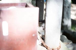 Pancolar 50mm グッタペルカ柄の古めかしい味わいと街歩き in 狛江