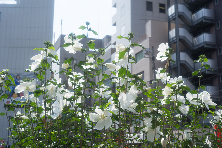 160720_DSC09207_Konishiroku50mm