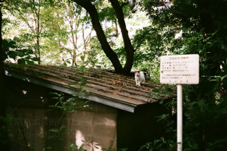 Continued Primagon 35mm with filmcamera, tone expression of Primagon in Aoyama, Gaienmae